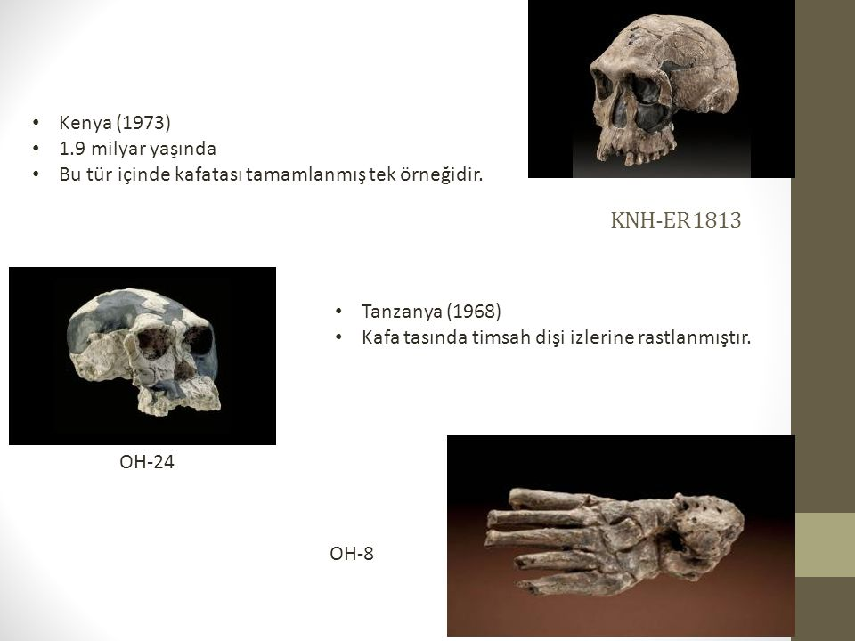 KNH-ER 1813 Kenya (1973) 1.9 milyar yaşında