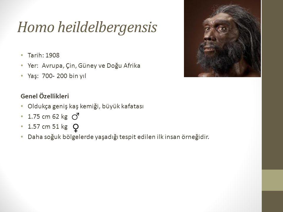 Homo heildelbergensis