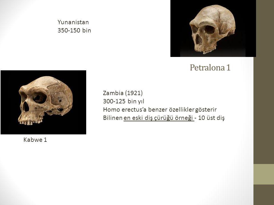 Petralona 1 Yunanistan 350-150 bin Zambia (1921) 300-125 bin yıl