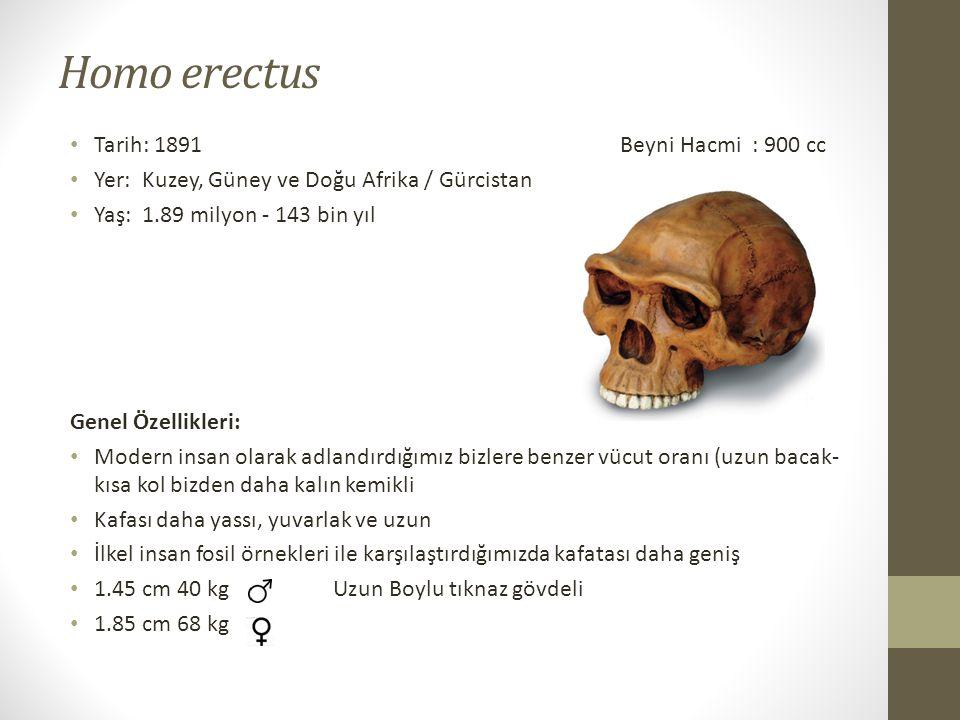 Homo erectus Tarih: 1891 Beyni Hacmi : 900 cc