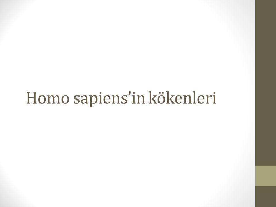 Homo sapiens'in kökenleri