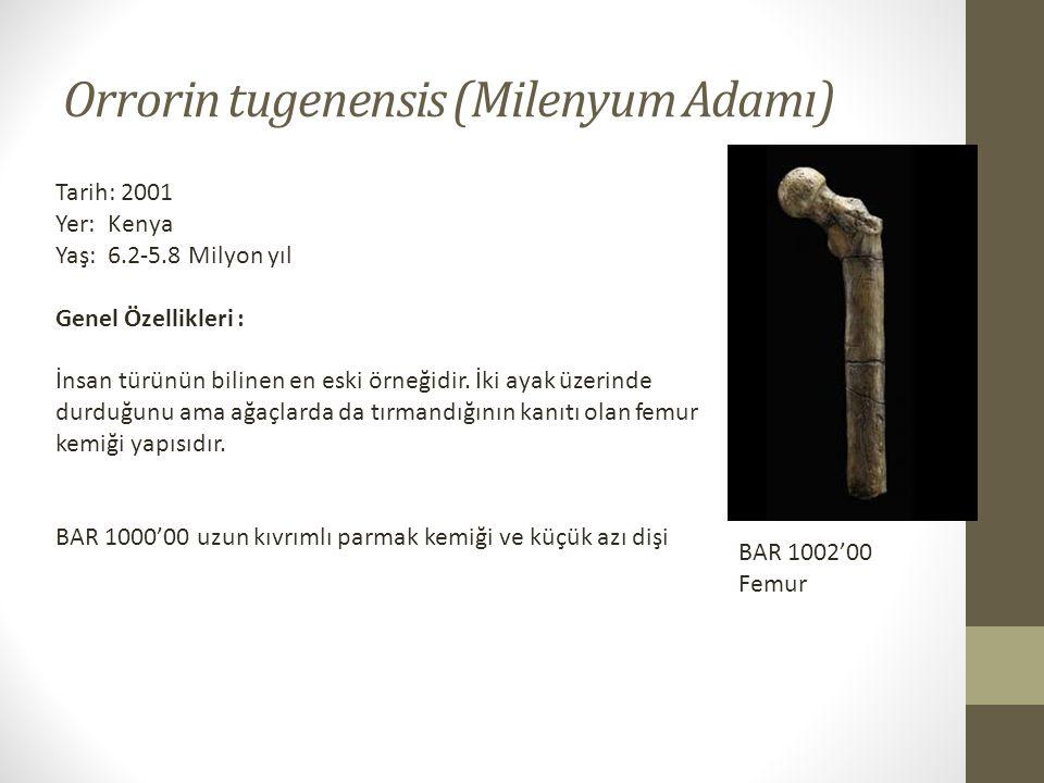Orrorin tugenensis (Milenyum Adamı)