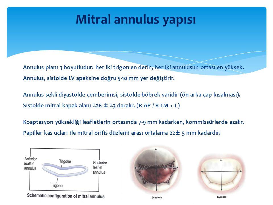 Mitral annulus yapısı