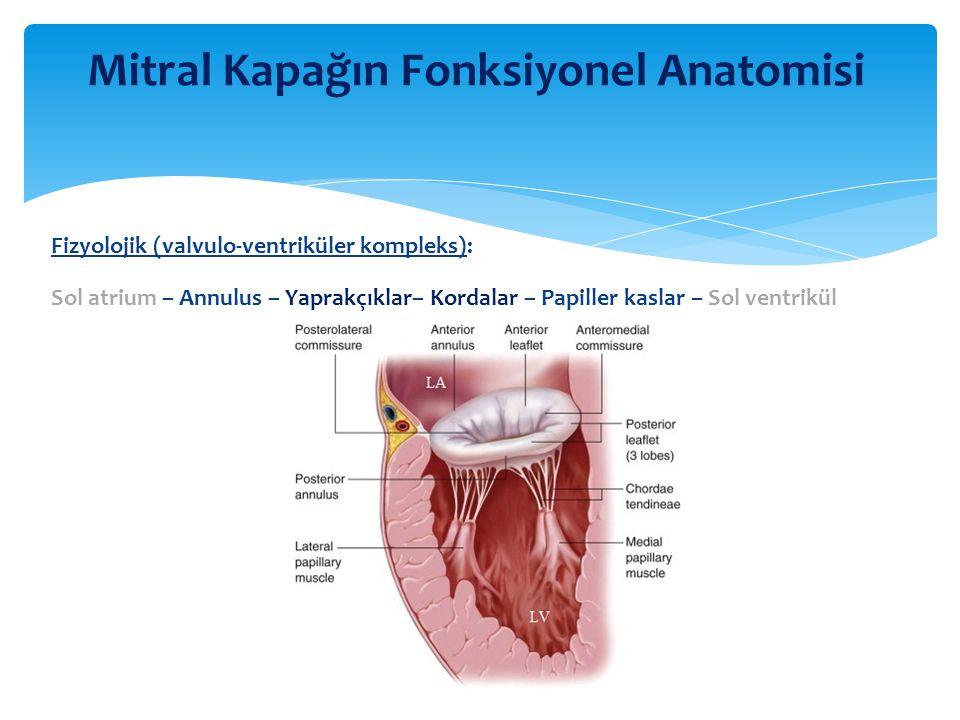 Mitral Kapağın Fonksiyonel Anatomisi