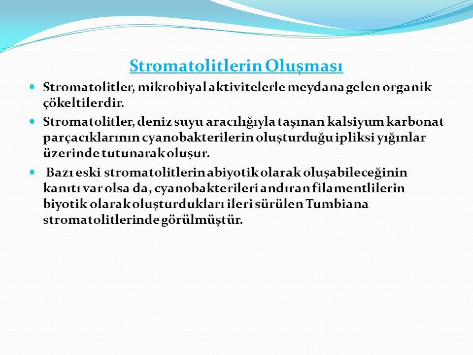 Stromatolitlerin Oluşması