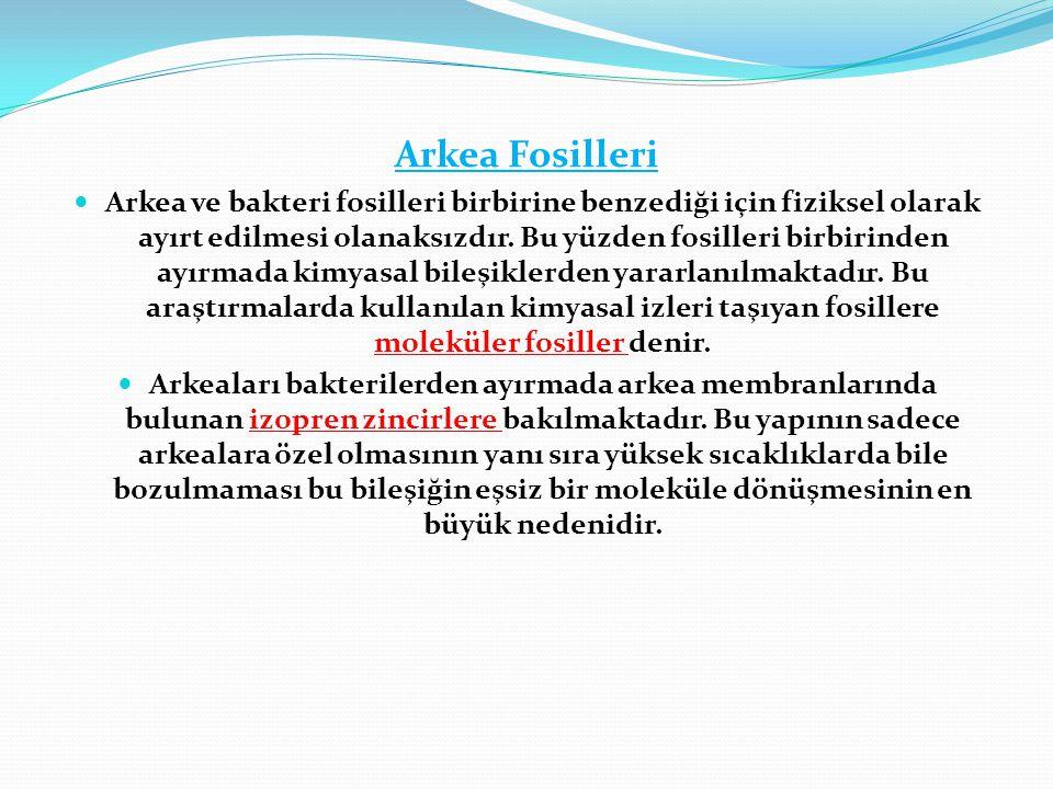 Arkea Fosilleri