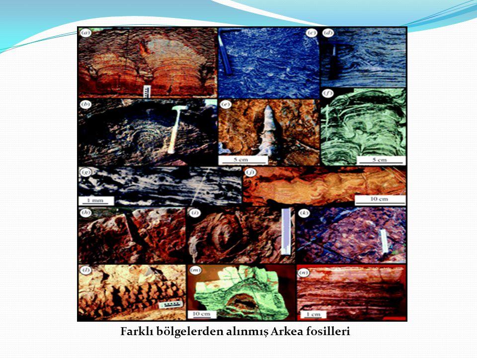 Farklı bölgelerden alınmış Arkea fosilleri