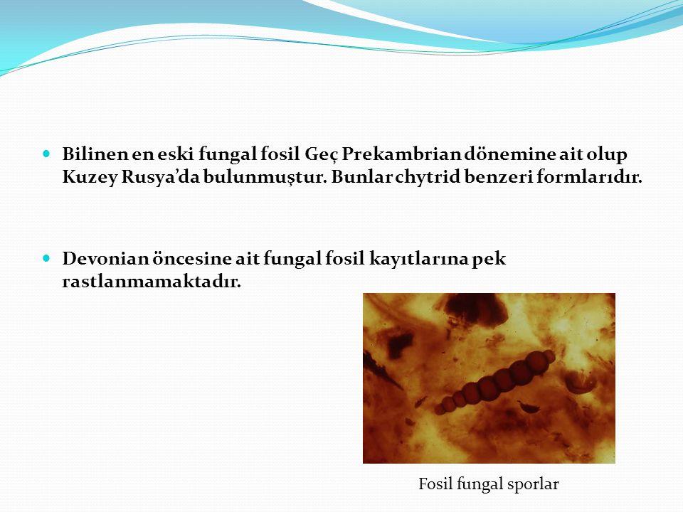 Devonian öncesine ait fungal fosil kayıtlarına pek rastlanmamaktadır.