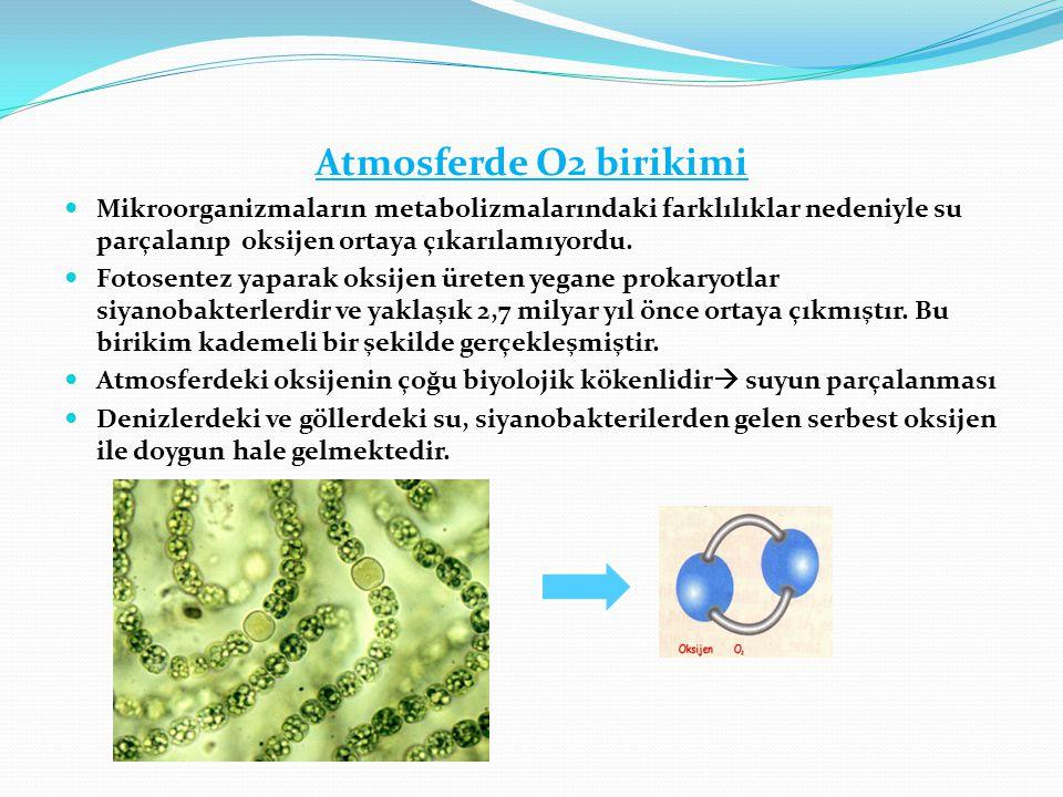 Atmosferde O2 birikimi Mikroorganizmaların metabolizmalarındaki farklılıklar nedeniyle su parçalanıp oksijen ortaya çıkarılamıyordu.