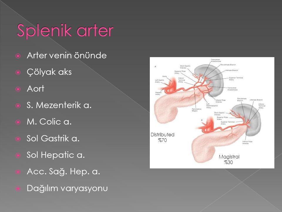 Splenik arter Arter venin önünde Çölyak aks Aort S. Mezenterik a.