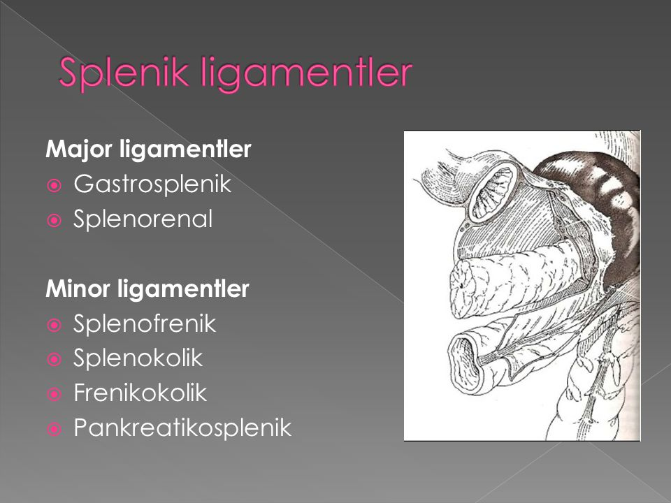 Splenik ligamentler Major ligamentler Gastrosplenik Splenorenal