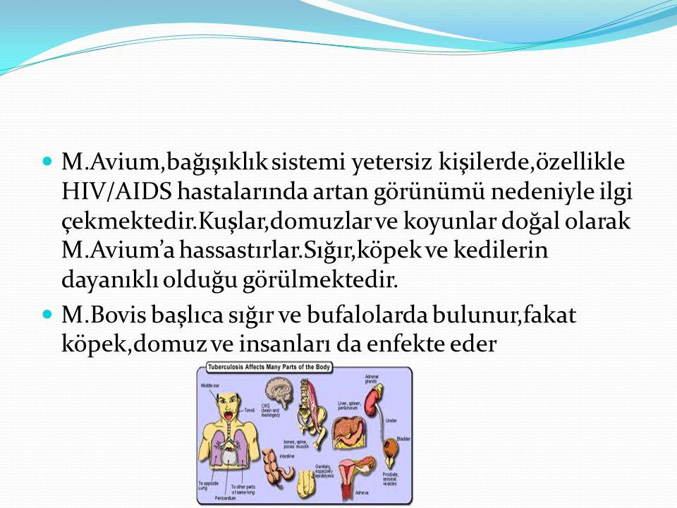 M.Avium,bağışıklık sistemi yetersiz kişilerde,özellikle HIV/AIDS hastalarında artan görünümü nedeniyle ilgi çekmektedir.Kuşlar,domuzlar ve koyunlar doğal olarak M.Avium'a hassastırlar.Sığır,köpek ve kedilerin dayanıklı olduğu görülmektedir.