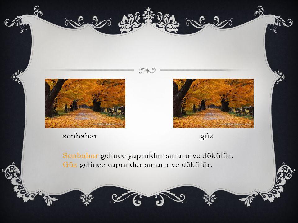 sonbahar güz. Sonbahar gelince yapraklar sararır ve dökülür.