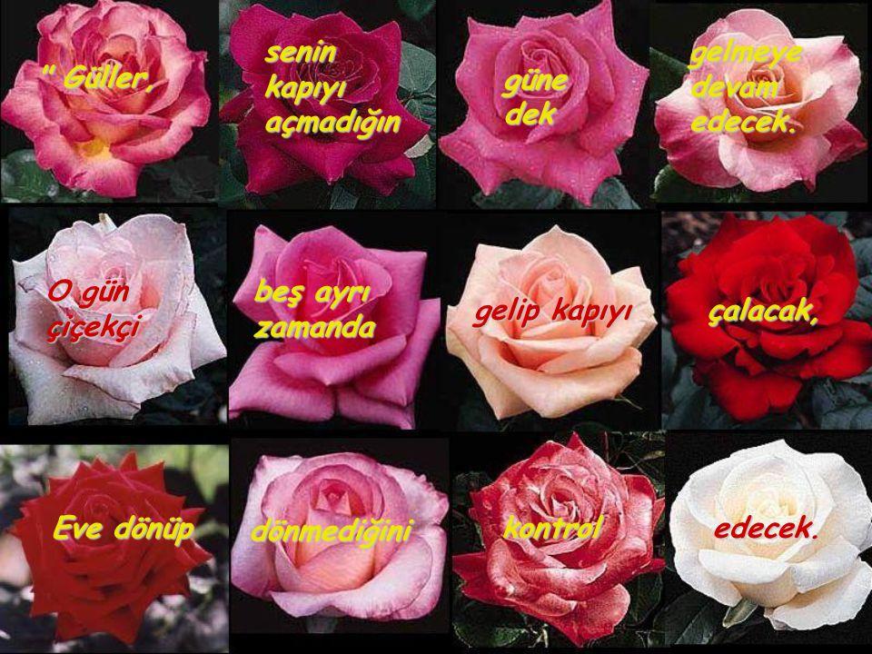 güne dek. senin. kapıyı. açmadığın. gelmeye. devam. edecek. Güller, O gün. çiçekçi. beş ayrı.