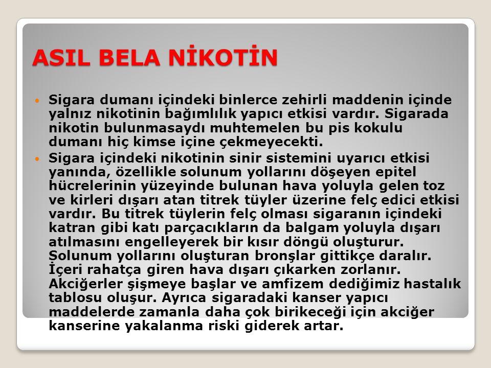 ASIL BELA NİKOTİN