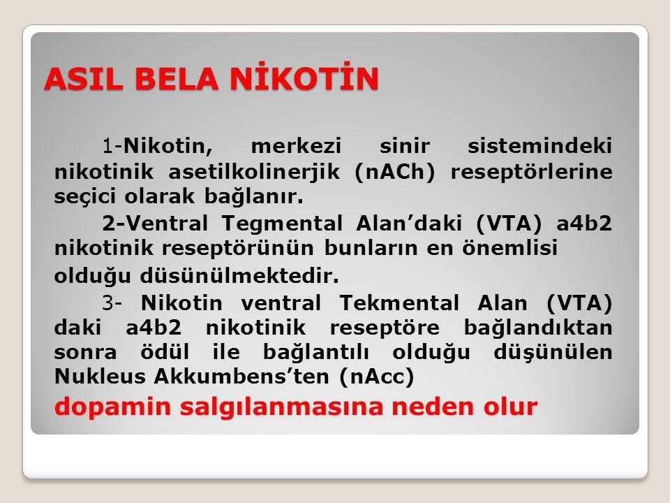ASIL BELA NİKOTİN 1-Nikotin, merkezi sinir sistemindeki nikotinik asetilkolinerjik (nACh) reseptörlerine seçici olarak bağlanır.
