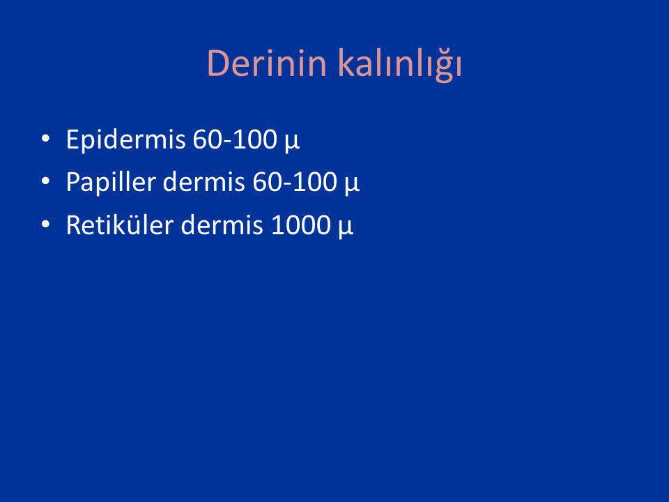 Derinin kalınlığı Epidermis 60-100 µ Papiller dermis 60-100 µ