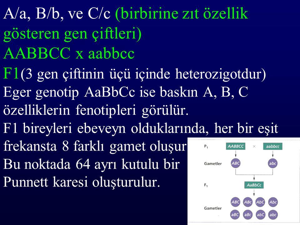 A/a, B/b, ve C/c (birbirine zıt özellik gösteren gen çiftleri) AABBCC x aabbcc F1(3 gen çiftinin üçü içinde heterozigotdur) Eger genotip AaBbCc ise baskın A, B, C özelliklerin fenotipleri görülür.