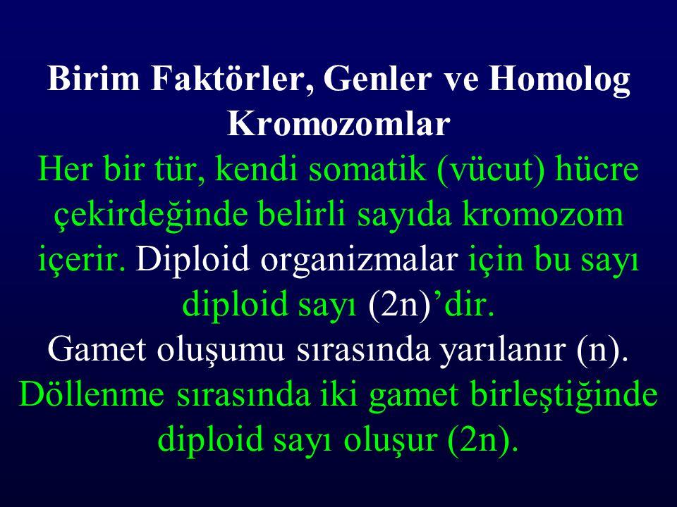 Birim Faktörler, Genler ve Homolog Kromozomlar Her bir tür, kendi somatik (vücut) hücre çekirdeğinde belirli sayıda kromozom içerir.