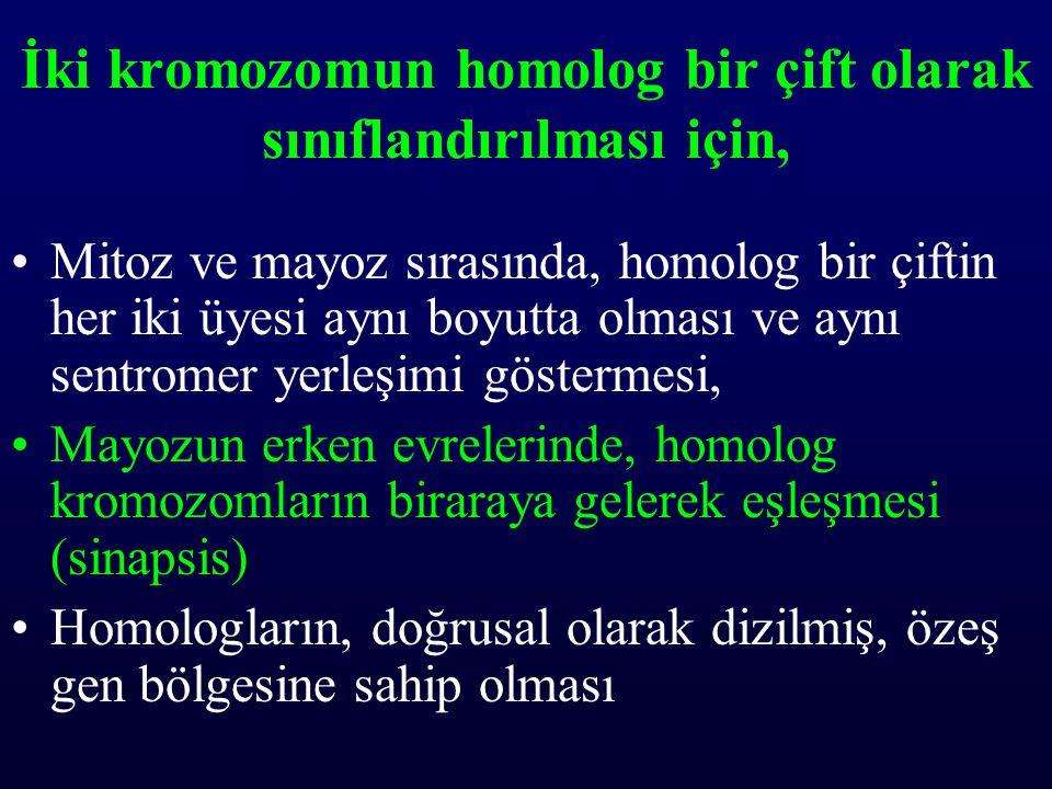İki kromozomun homolog bir çift olarak sınıflandırılması için,