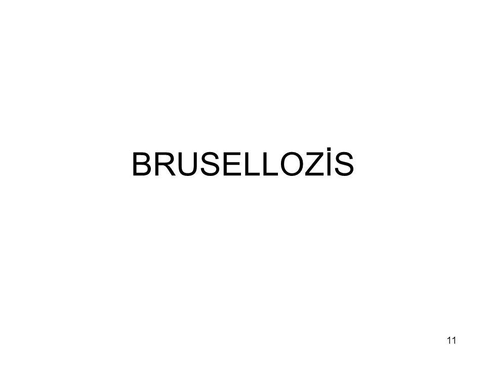 BRUSELLOZİS