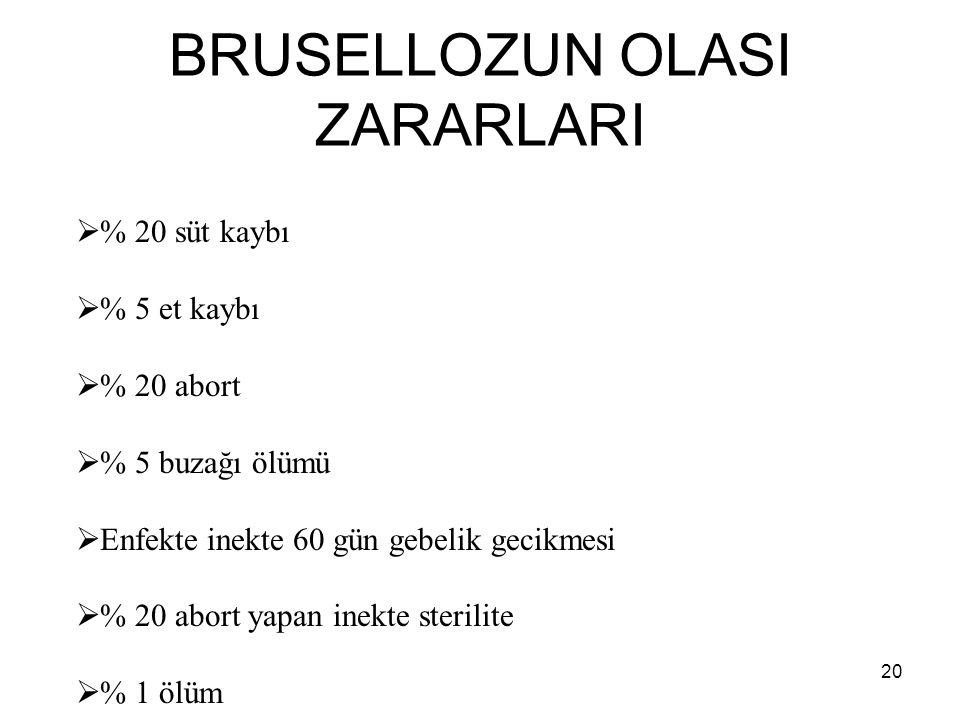 BRUSELLOZUN OLASI ZARARLARI