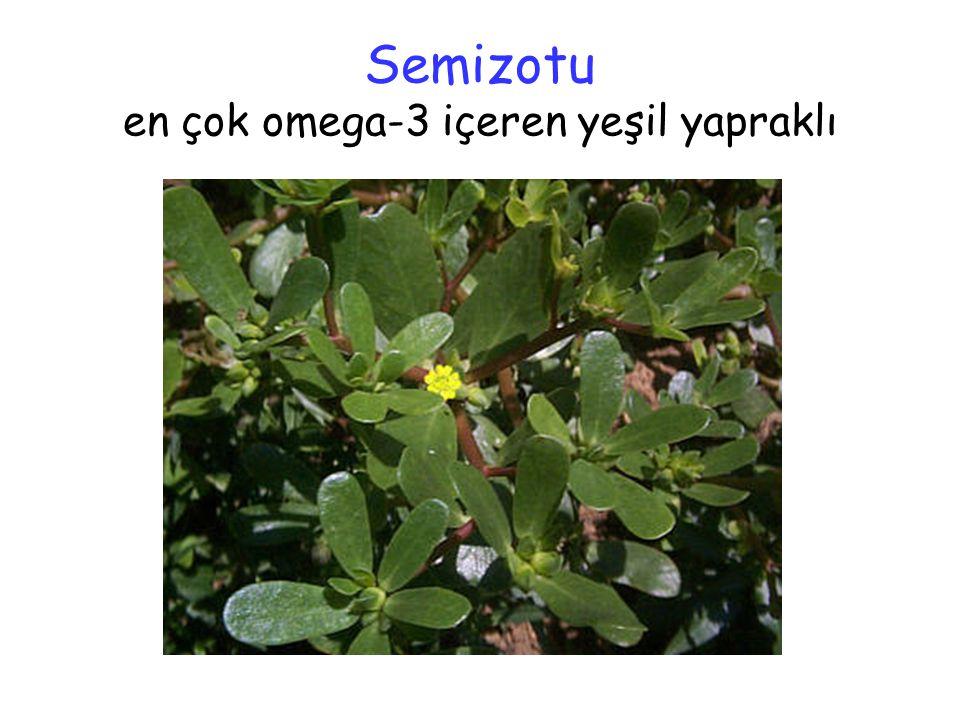 Semizotu en çok omega-3 içeren yeşil yapraklı