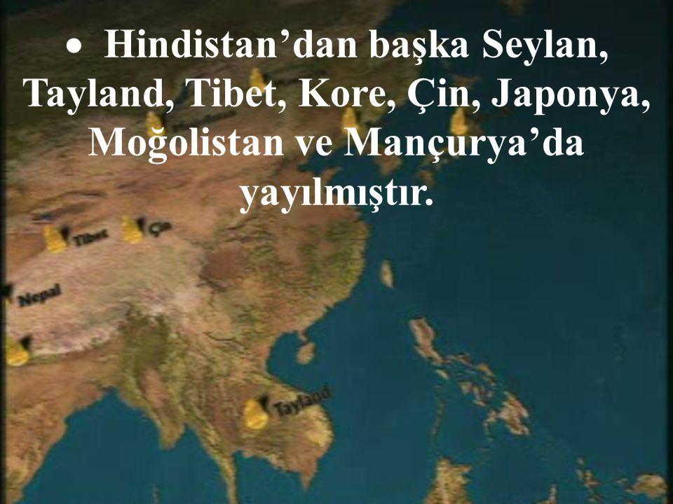 Hindistan'dan başka Seylan, Tayland, Tibet, Kore, Çin, Japonya, Moğolistan ve Mançurya'da yayılmıştır.