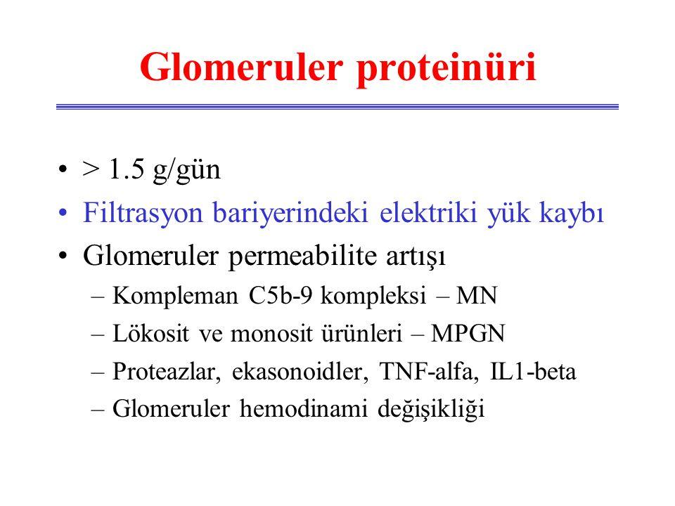 Glomeruler proteinüri