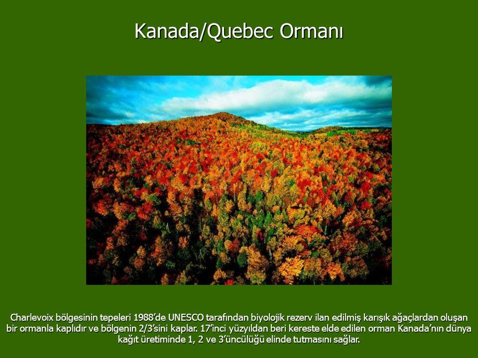 Kanada/Quebec Ormanı