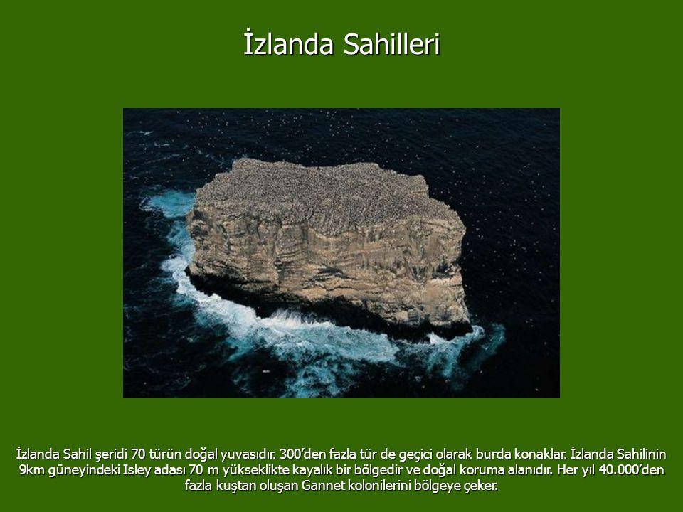 İzlanda Sahilleri