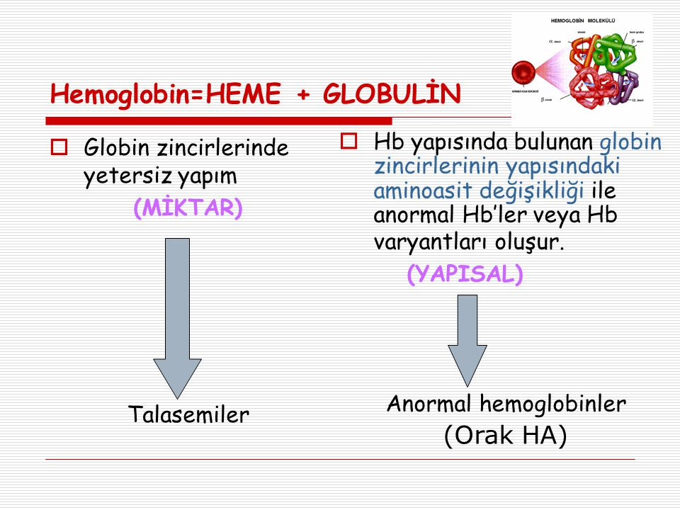 Hemoglobin=HEME + GLOBULİN