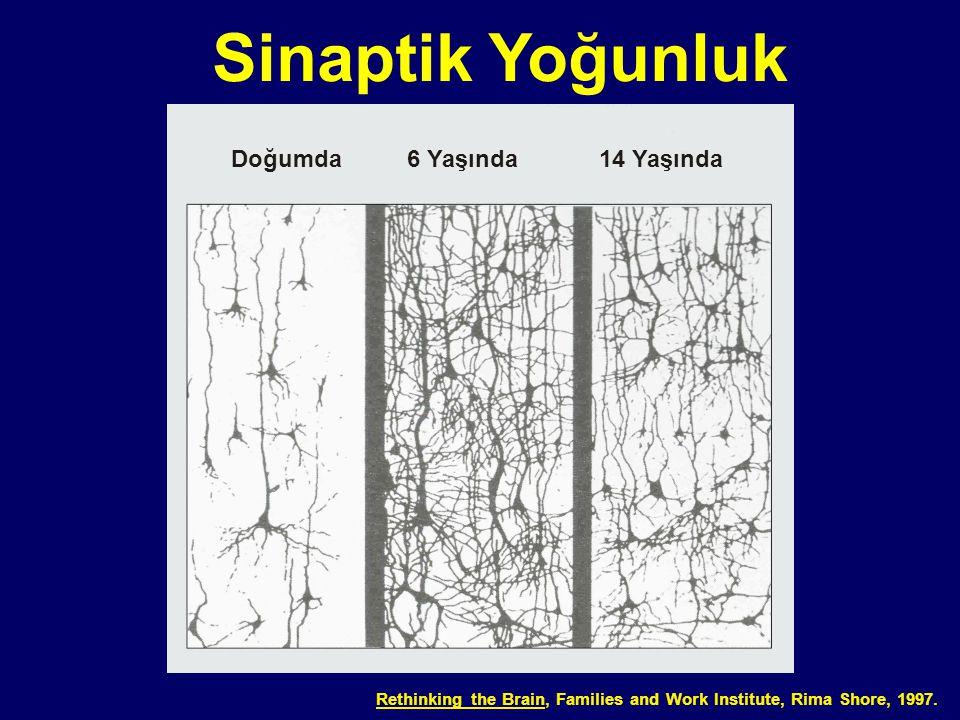 Sinaptik Yoğunluk Doğumda 6 Yaşında 14 Yaşında 03-012