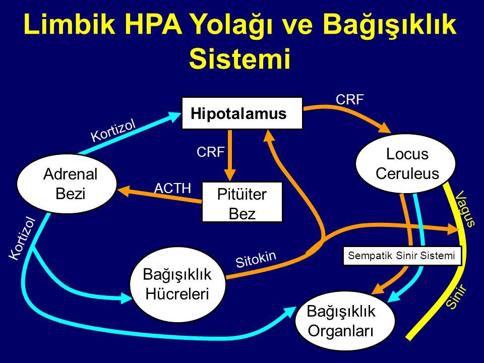 Limbik HPA Yolağı ve Bağışıklık Sistemi