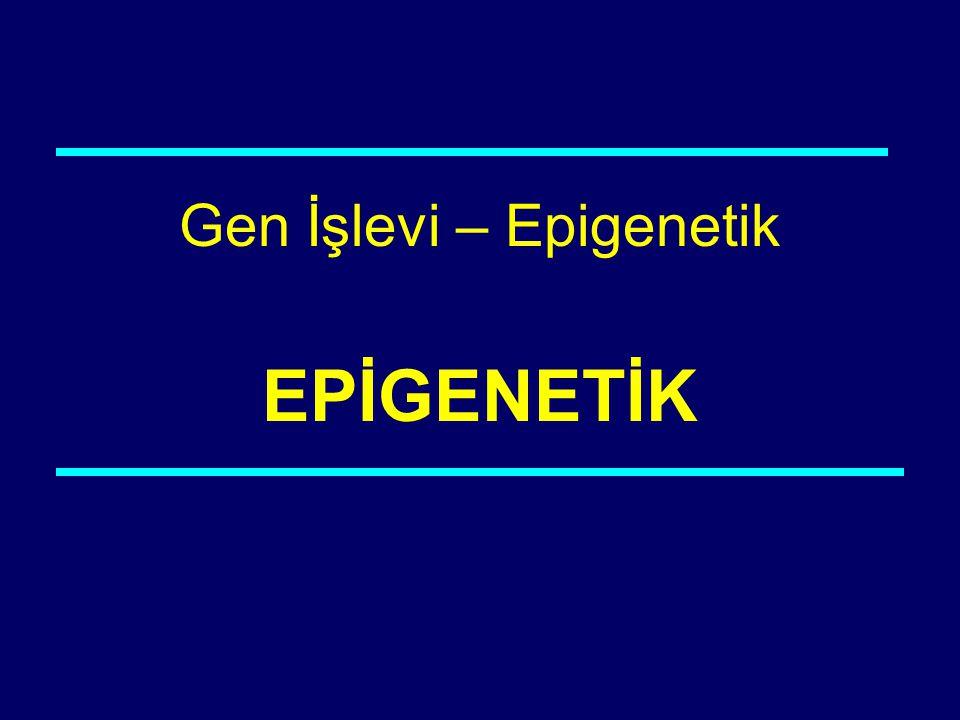 Gen İşlevi – Epigenetik