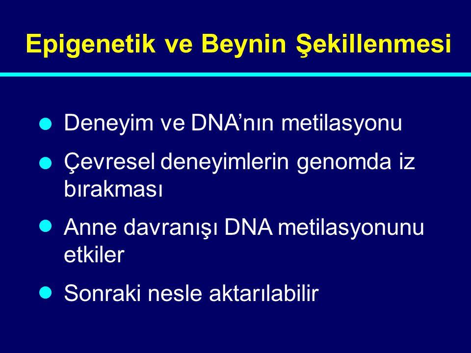Epigenetik ve Beynin Şekillenmesi