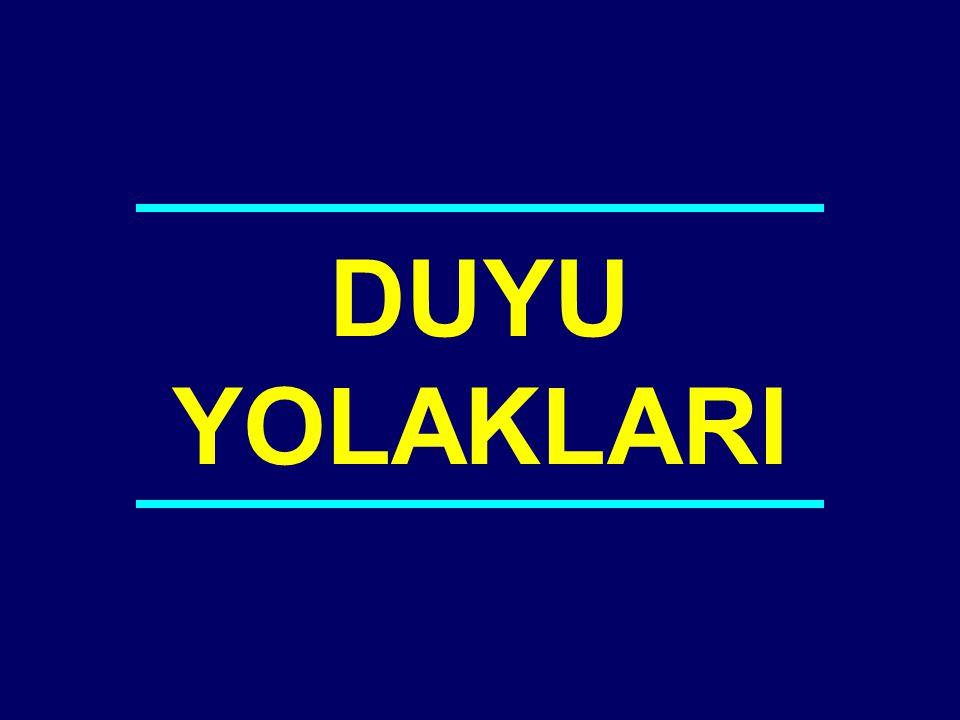 04-042 DUYU YOLAKLARI
