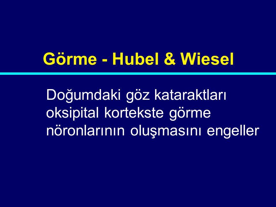 Görme - Hubel & Wiesel Doğumdaki göz kataraktları