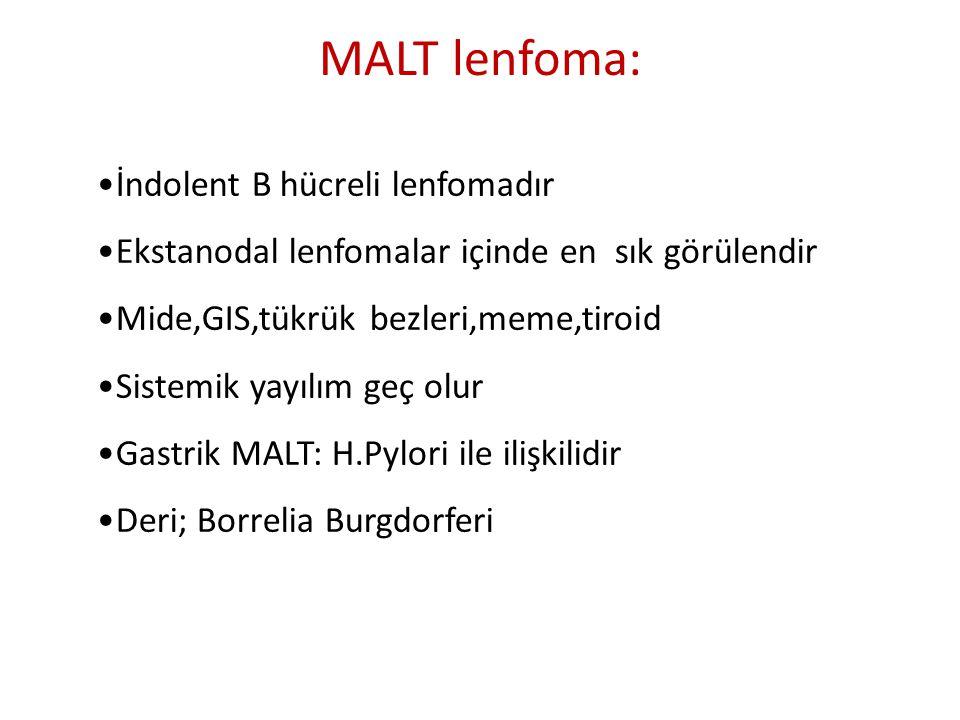 MALT lenfoma: İndolent B hücreli lenfomadır