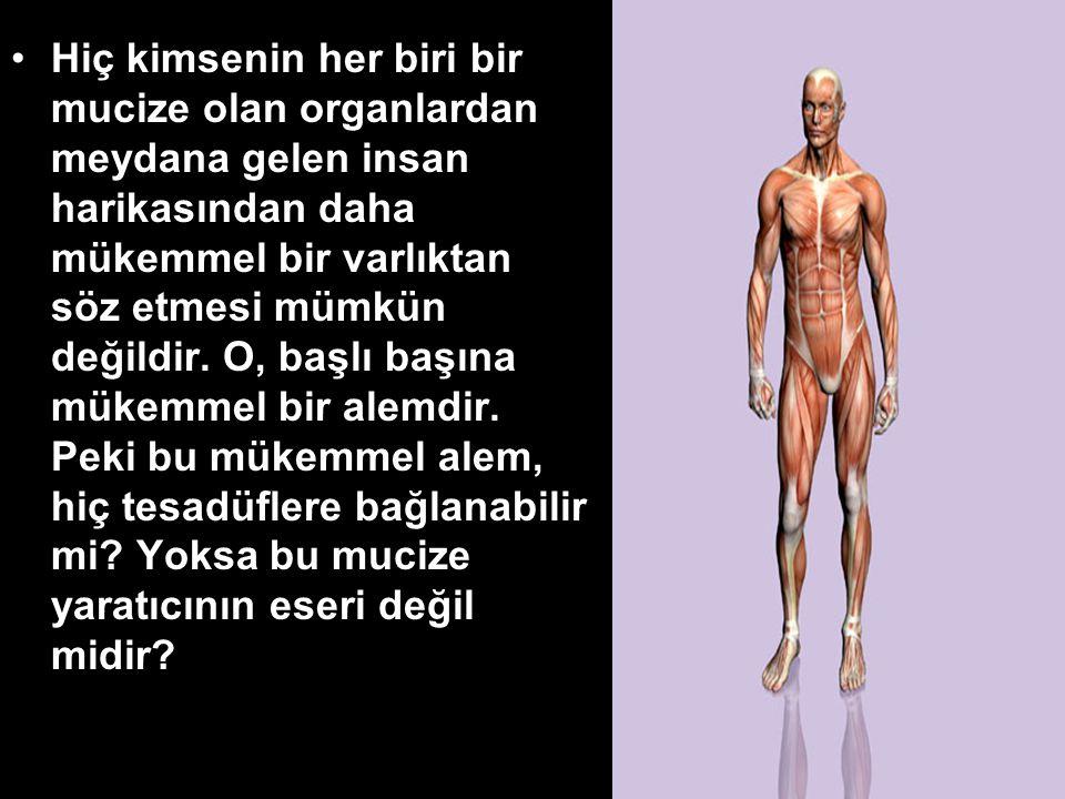 Hiç kimsenin her biri bir mucize olan organlardan meydana gelen insan harikasından daha mükemmel bir varlıktan söz etmesi mümkün değildir.