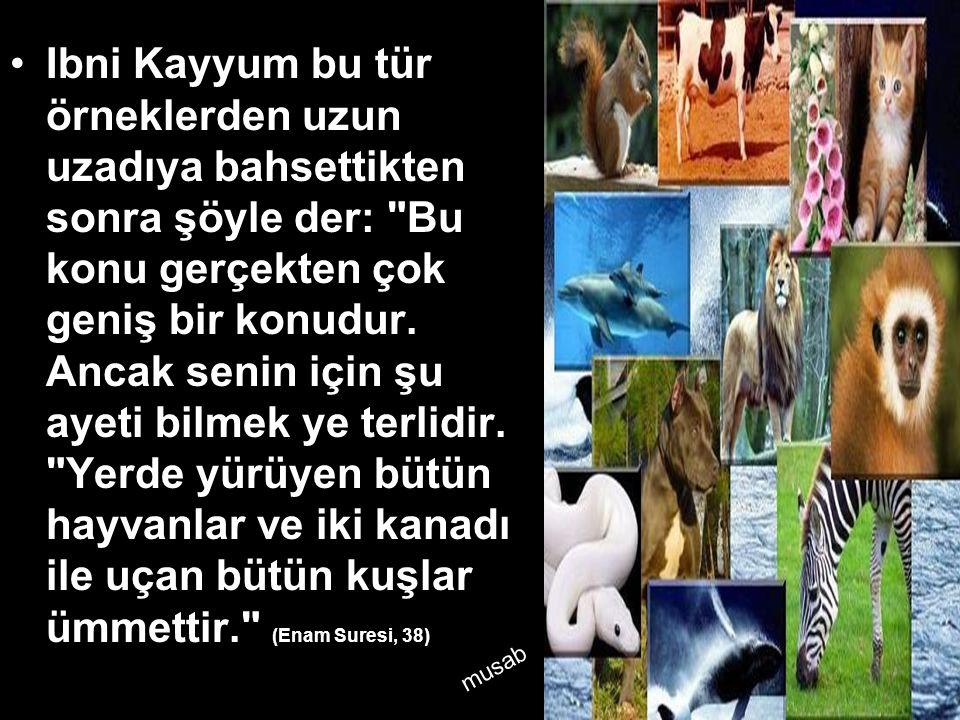Ibni Kayyum bu tür örneklerden uzun uzadıya bahsettikten sonra şöyle der: Bu konu gerçekten çok geniş bir konudur. Ancak senin için şu ayeti bilmek ye terlidir. Yerde yürüyen bütün hayvanlar ve iki kanadı ile uçan bütün kuşlar ümmettir. (Enam Suresi, 38)