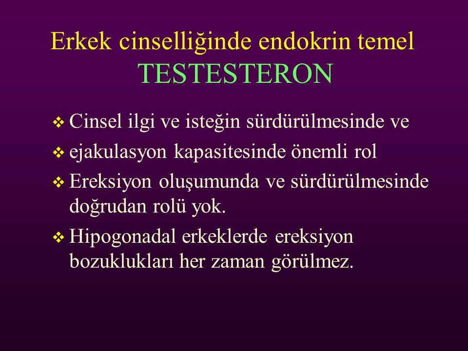 Erkek cinselliğinde endokrin temel TESTESTERON