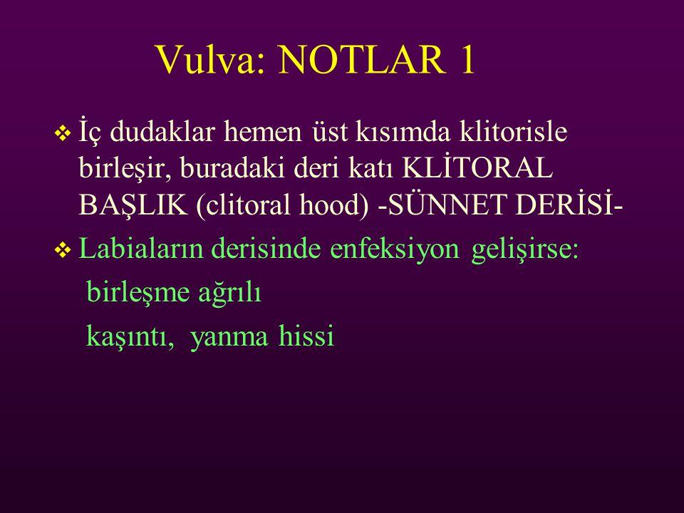 Vulva: NOTLAR 1 İç dudaklar hemen üst kısımda klitorisle birleşir, buradaki deri katı KLİTORAL BAŞLIK (clitoral hood) -SÜNNET DERİSİ-