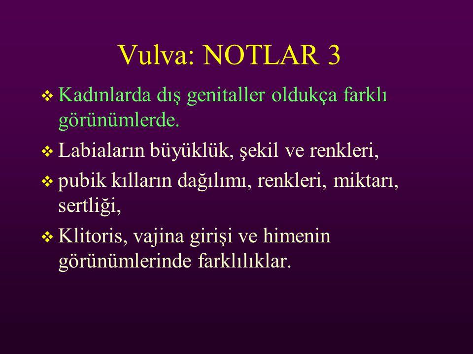 Vulva: NOTLAR 3 Kadınlarda dış genitaller oldukça farklı görünümlerde.