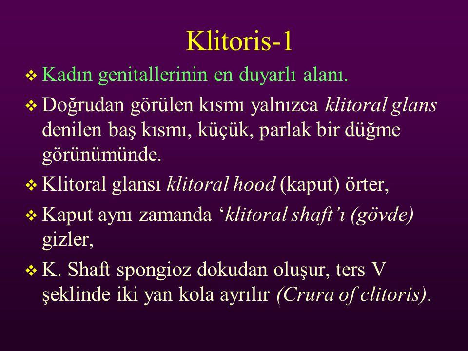 Klitoris-1 Kadın genitallerinin en duyarlı alanı.