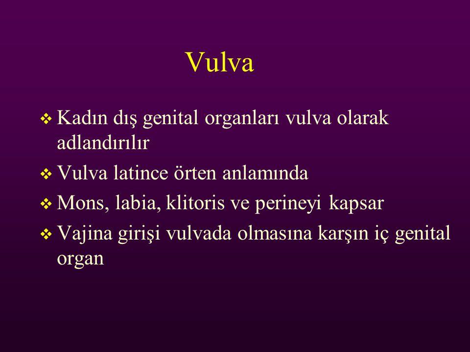 Vulva Kadın dış genital organları vulva olarak adlandırılır