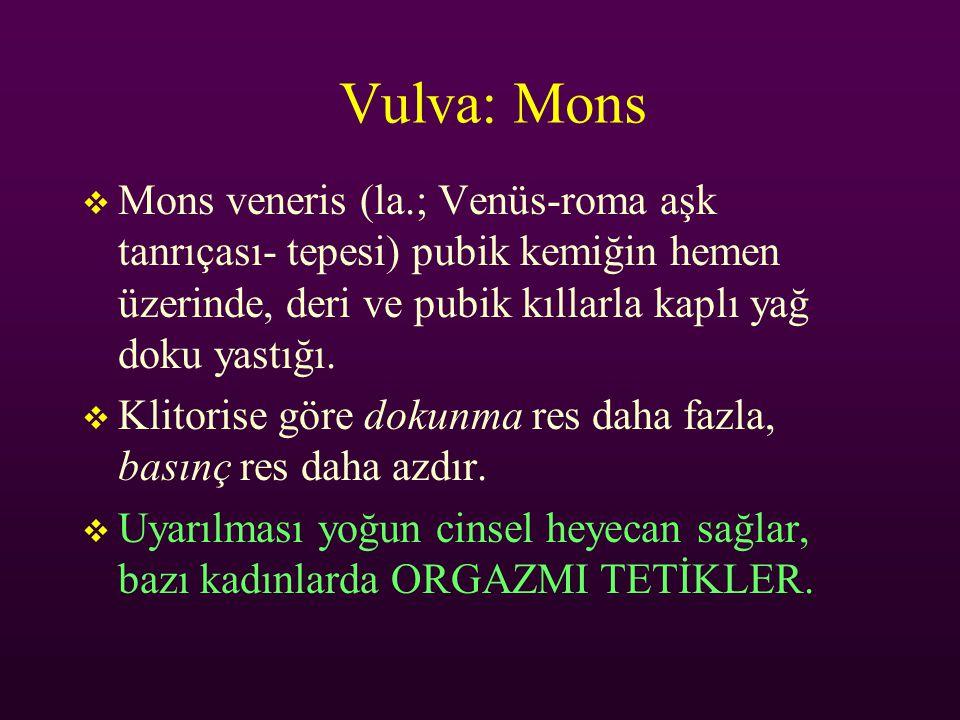 Vulva: Mons Mons veneris (la.; Venüs-roma aşk tanrıçası- tepesi) pubik kemiğin hemen üzerinde, deri ve pubik kıllarla kaplı yağ doku yastığı.