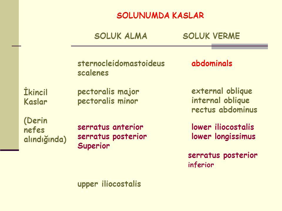 SOLUNUMDA KASLAR İkincil Kaslar. (Derin nefes alındığında) SOLUK ALMA. SOLUK VERME. sternocleidomastoideus scalenes.