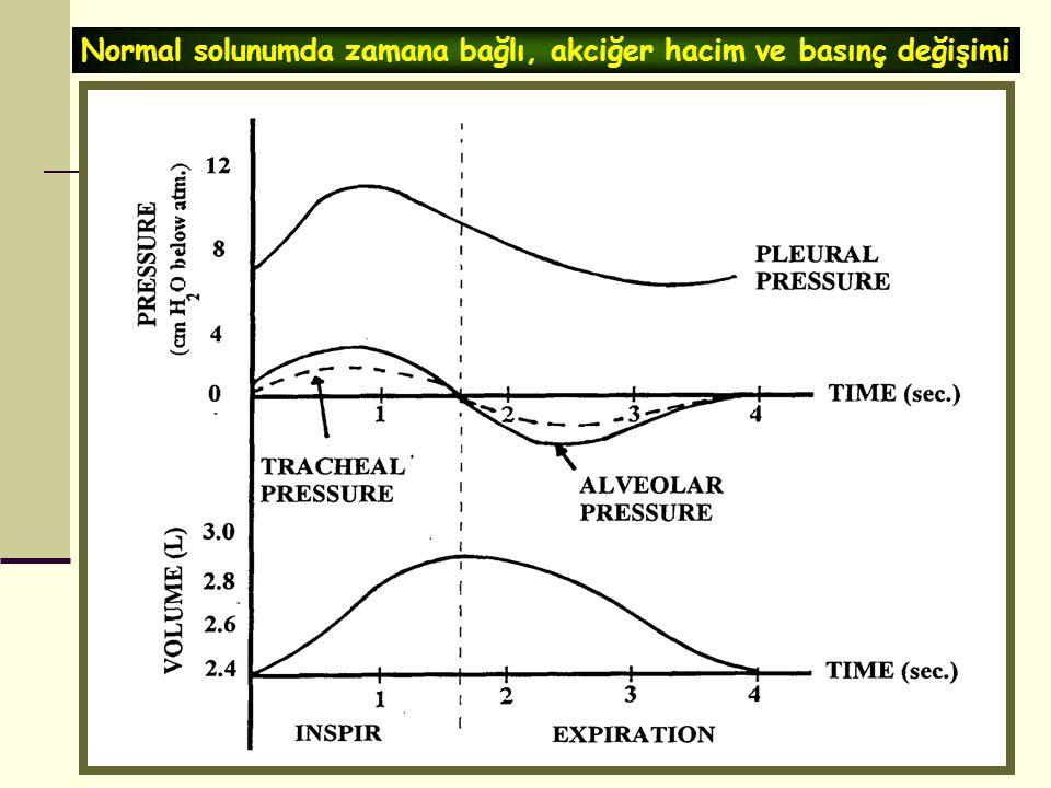 Normal solunumda zamana bağlı, akciğer hacim ve basınç değişimi