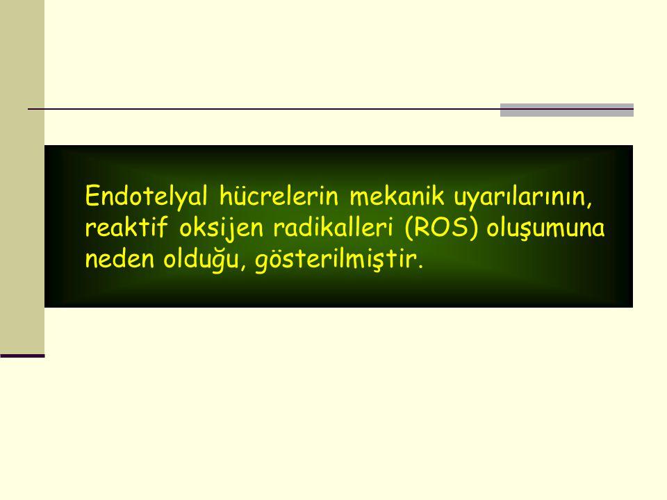 Endotelyal hücrelerin mekanik uyarılarının,